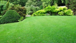 Large lawn with trimmed bushes